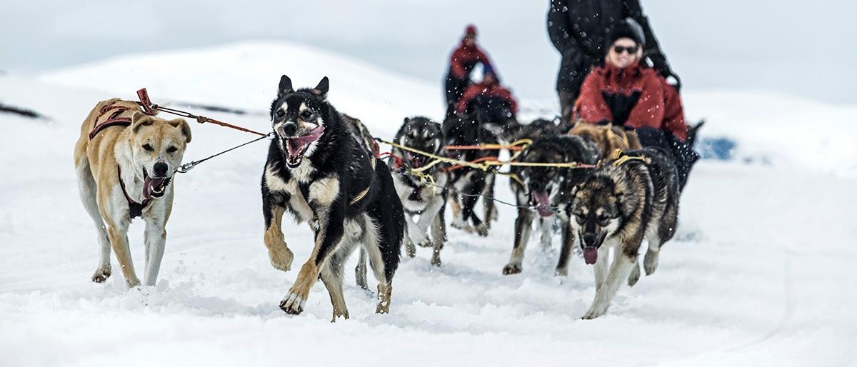 Björkliden Dog Sledding © Markus Alatalo