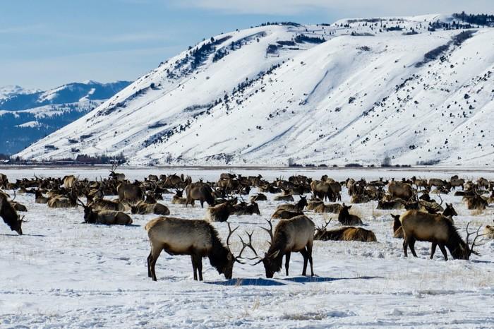 Jan Clifford - Elk Reguge Elks