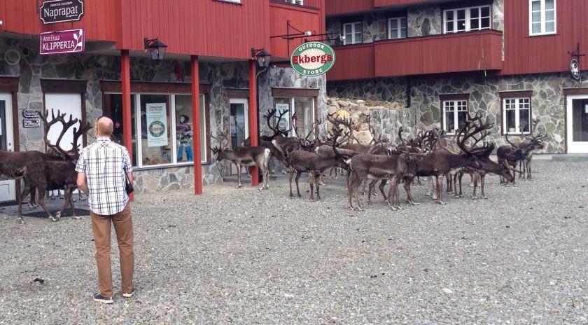 Reindeer Herd Hovde Hotel