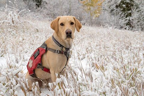 Vail Snow Dog © Andrew Taylor
