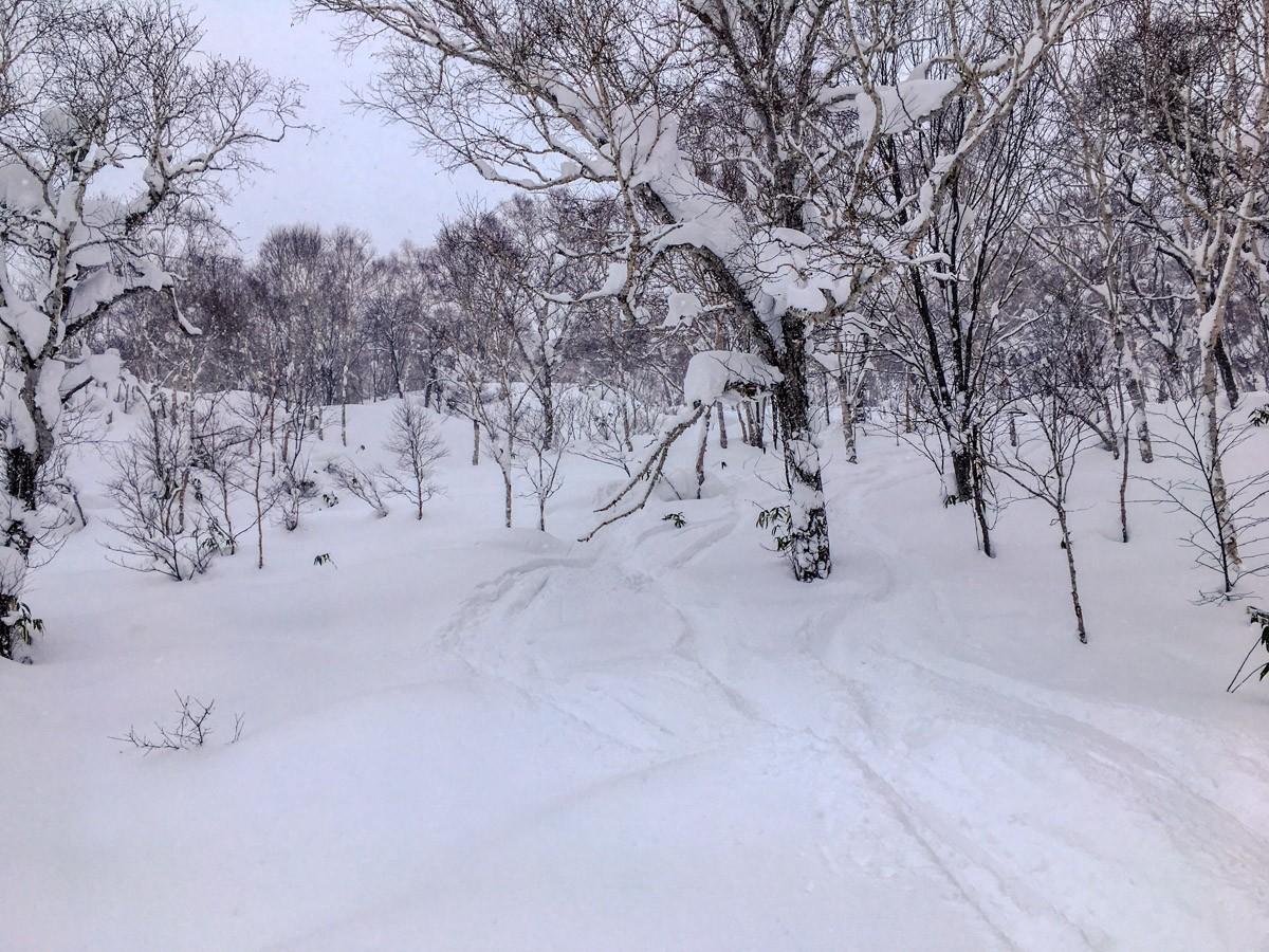 Chisenupuri Cat Skiing - Tree Runs