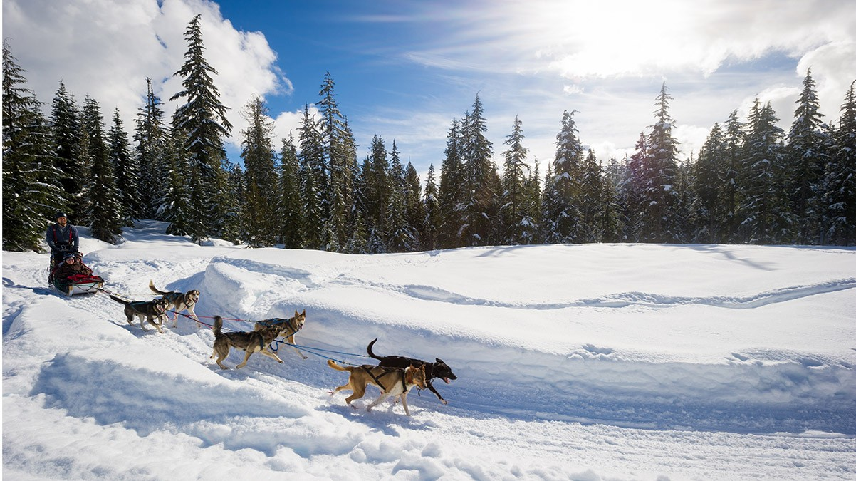 Dog Sledding in Whistler © Tourism Whistler / Mike Crane