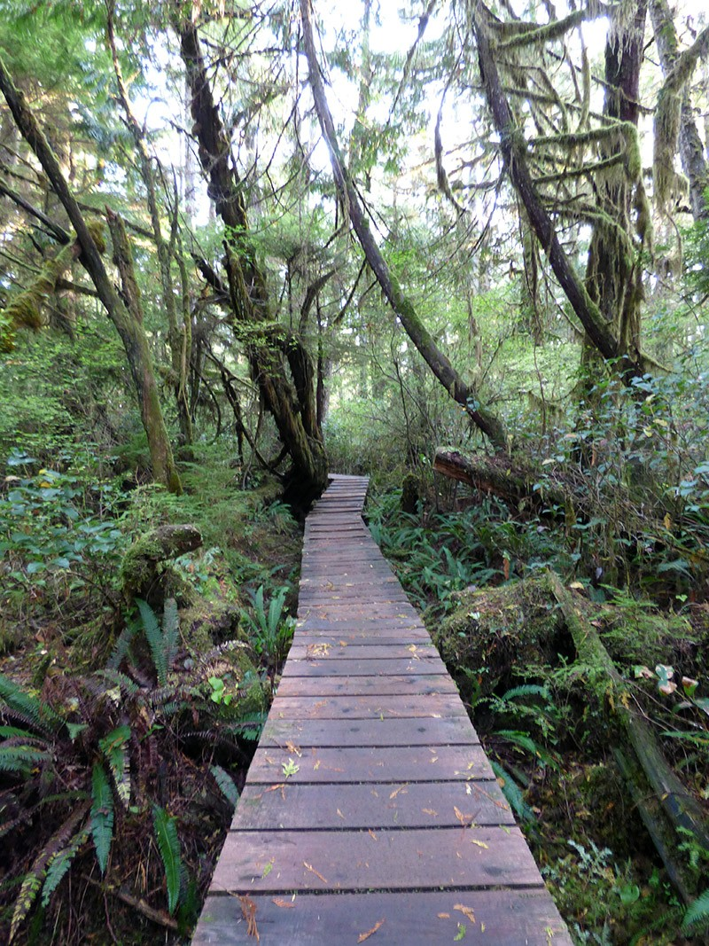 The Rainforest Trail in Pacific Rim National Park