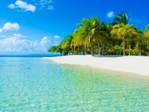 Sunny Caribbean Beach With Palm Trees